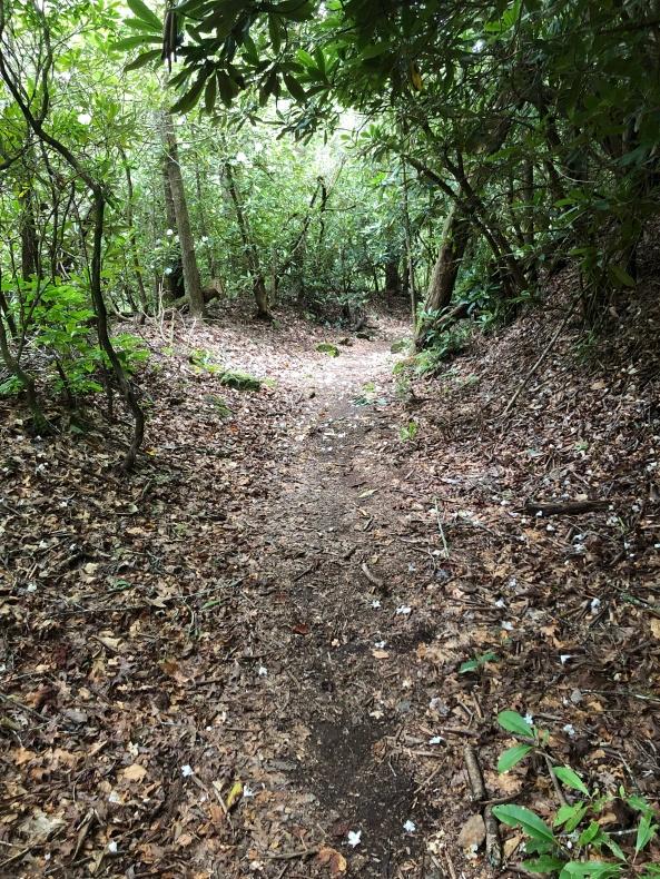 5. Big Creek Trail